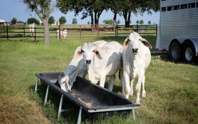 L'accessibilité & la qualité de l'eau dans nos élevages