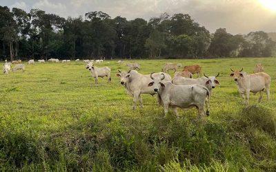 Conditions d'éligibilité des éleveurs au POSEI